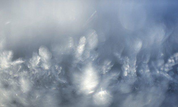 Laboratorio-olosuhteista villiin luontoon: makrokuvausta merellä